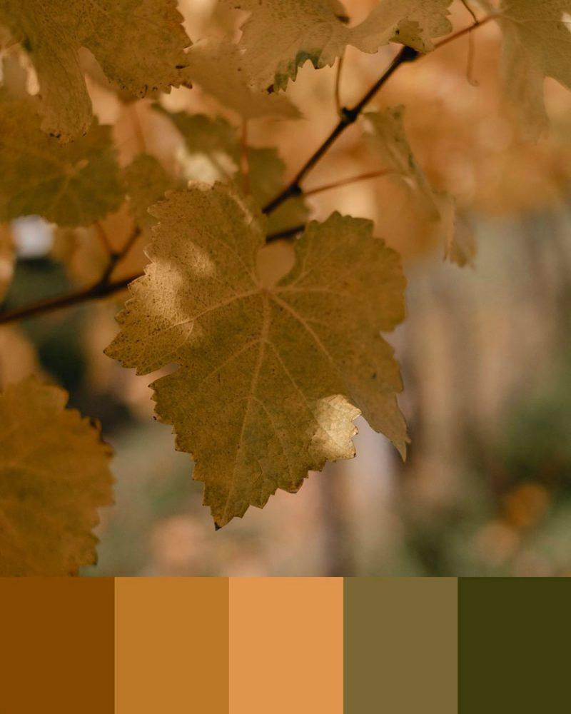 palette colori autunno copertina